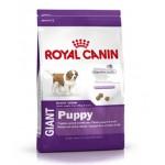 Royal Canin GIANT PUPPY ชนิดเม็ด สำหรับลูกสุนัขพันธุ์ยักษ์ช่วงอย่านม-8 เดือน 15 kg
