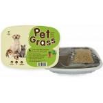 Pet Grass หญ้าสำหรับสัตว์เลี้ยง
